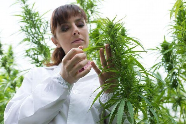 4 usos de la marihuana en la salud femenina