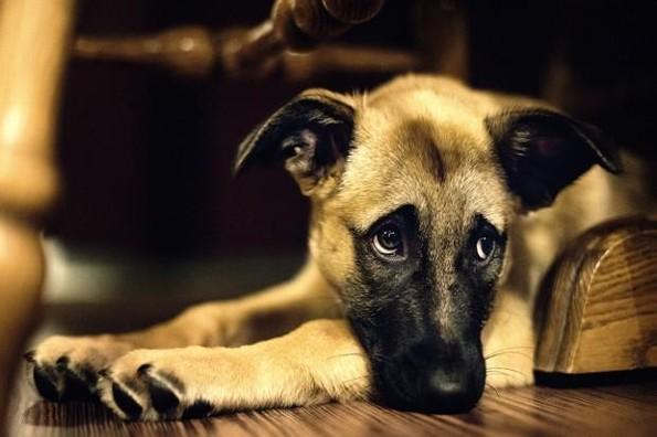 Veterinario revela qué hacen las mascotas antes de morir (+FOTOS)