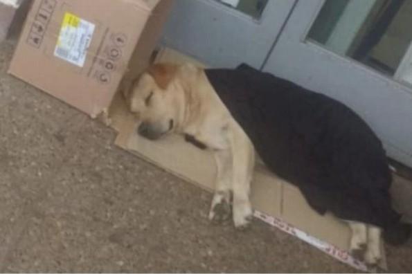 Perrito espera afuera del hospital sin saber que su dueño falleció