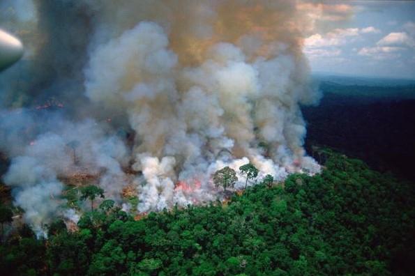 ¿Qué está pasando con el incendio de el Amazonas?