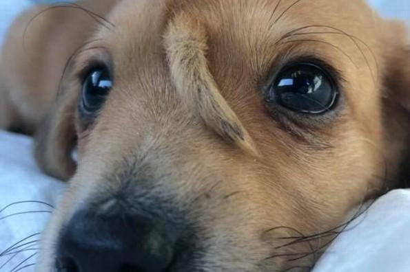 Hallan perrito con mini ´ colita´ en la cara #FOTOS